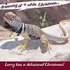 Christmas card, 2013