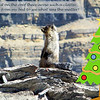 A Hoary Marmot pays a visit to our ridgetop dining room as goes into alert mode.  Perhaps watching for the Golden Eagle we saw earlier.