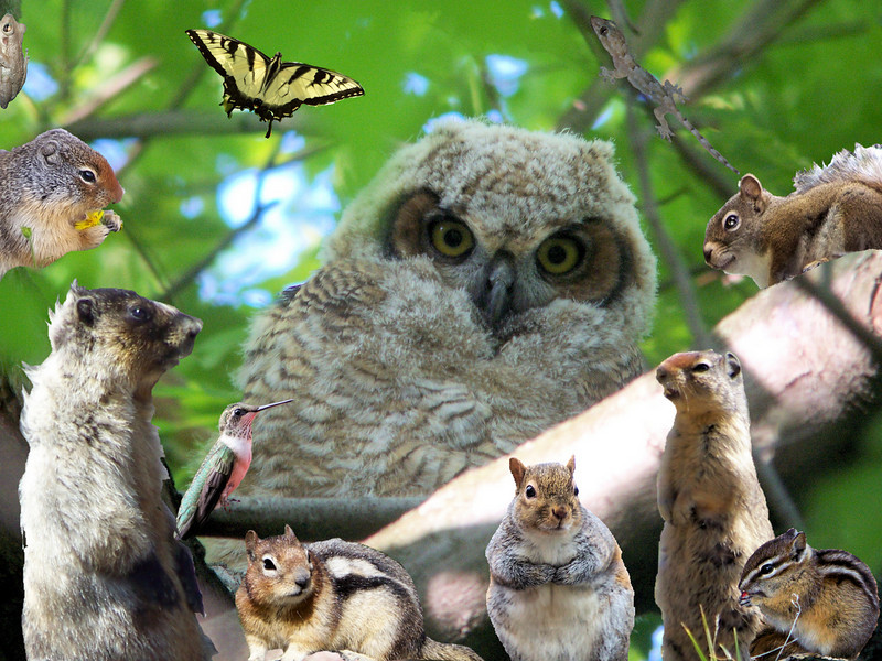 Ollie the Owlet invites his woodland friends for holiday brunch.   Christmas card design, 2010