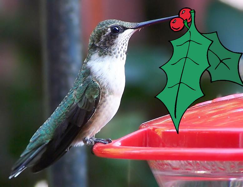 Herbert the Hummingbird decorates his feeder -- Christmas 2007