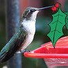 Herbert the Hummingbird -- Christmas 2007