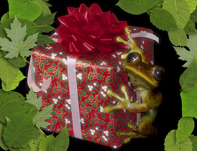 Just a little composite Patti used for a holiday-themed postage stamp.  The frog is from the Tambopata Research Center in the Peruvian jungle.  Christmas, 2007