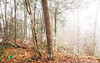Foggy Morning in Bogue Chitto State Park