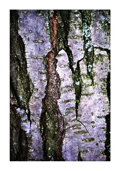 The harshness of a tree bark