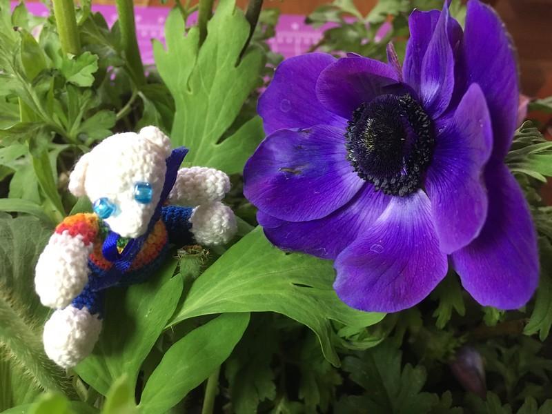 windflower blues