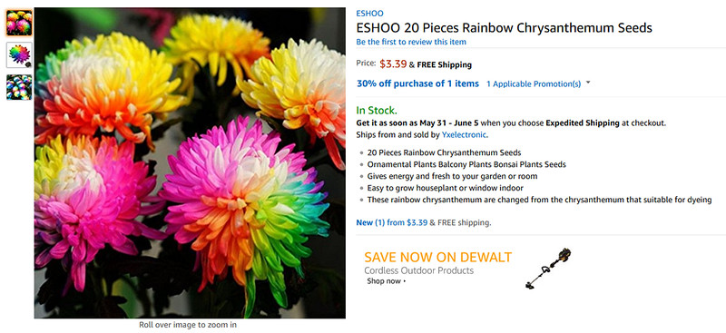 rainbow chrysanthemums
