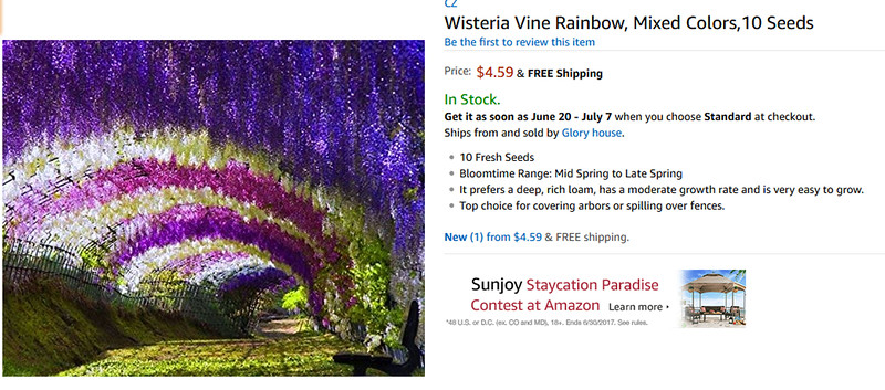rainbow wisteria