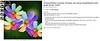 Rainbow Coreopsis