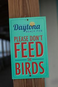 Daytona_112013-130
