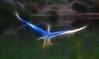 Fractalius Heron