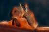 Fractalius Baby Marmots