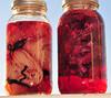 Maple Leaf Dye Pot and Red Onion Dye Pot