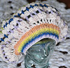 Slopestyle Slouchy Hat