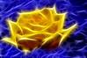 Fractalius Rose