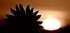Sepia Suns