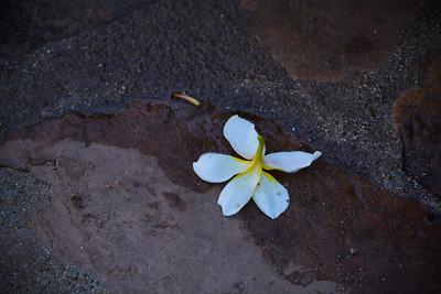 Hawaii-284