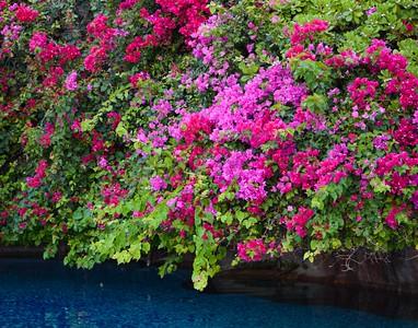 Hawaii-301h14