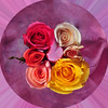 Rose World