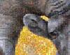 bighorn mosaic detail
