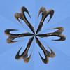 Bighornflake