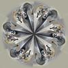 Smiling Bighornflake