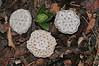 Garden Snowflakes