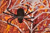 "<a href=""http://www.snowcatcher.net/2010/10/webflake-monday.html"" target=""_blank"">Spider Webflake</a>"