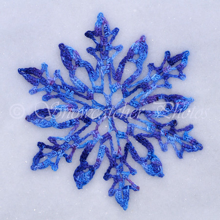 Snow-dyed Sophronia Snowflake