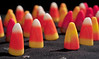 Candy Corn Army