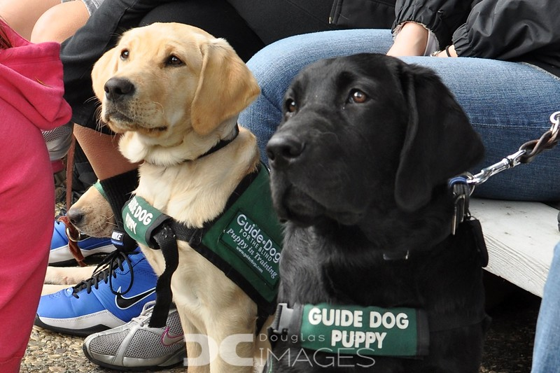 Guide Dogs Graduation
