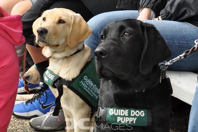 Guide Dogs Graduation