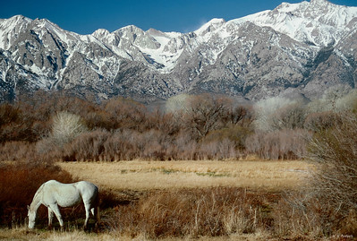 Ol' Dobbin Retires to Owens Valley, CA