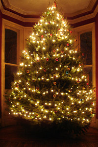The DPE Christmas tree - Washington, DC ... December 3, 2005 ... Photo by Rob Page III