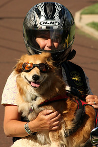 Karen and her dog - Chalfont, PA ... August 3, 2008 ... Photo by Rob Page III