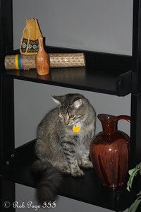 Shhh......  Heather doesn't know the cat jumped up on the shelf - Ottawa, ON ... September 27, 2009 .. Photo by Rob Page III
