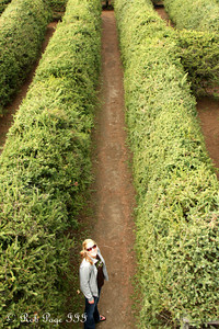 Heather lost in one of the mazes at Saunders Farm - Ottawa, ON ... September 26, 2009 ... Photo by Rob Page III
