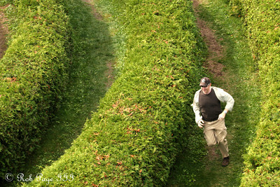 John in the Cedar Spiral Maze - Ottawa, ON ... September 26, 2009 ... Photo by Heather Fairley