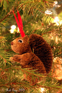 Squirrels live in our Christmas Tree - Washington, DC ... December 11, 2011 ... Photo by Rob Page III