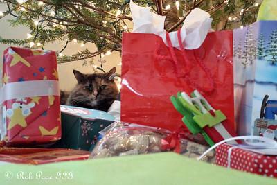 Yuki wishes you a Merry Christmas - Washington, DC ... December 25, 2014 ... Photo by Rob Page III