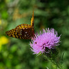 20130904 Butterfly at Mormon Handcart Park