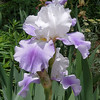 2013-06-01 Iris at Denny's-my shot of the day for Saturday