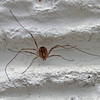 spider on the outside wall