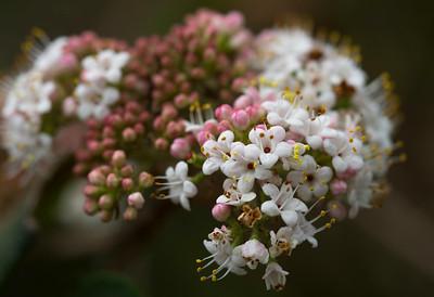 Spring colors (Seto)