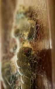 Spider web (Seto)