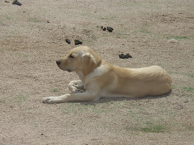 Basking in the sun...surrounded by poop... (BTW it's probably 110 degrees out at this point...what a weirdo!)