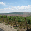 Vineyards at Col Solare Winery