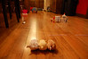 ZhuZhu Pets obstacle course, by Ellie & Mallery (1.7.10)