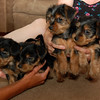 Daisy's brothers and sister (7.2.11)