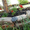 New rocks in the front yard (5.10.08).