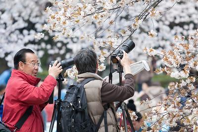 Sakura Hunters